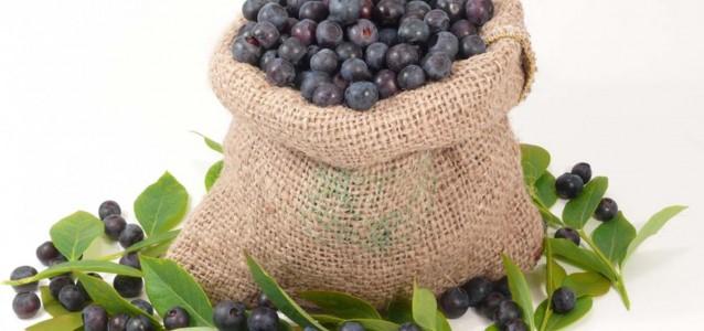 WildBlueberries